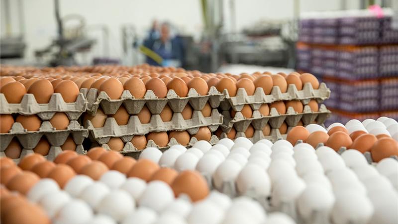 توقف صادرات تخم مرغ و دامپینگ ترکیه علیه بازارهای ایران
