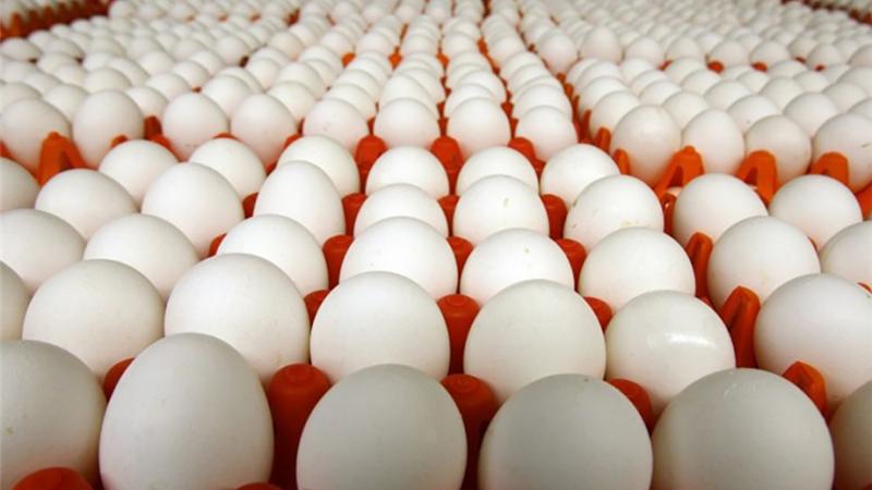 درخواست برای واردات تخم مرغ به اقلیم کردستان