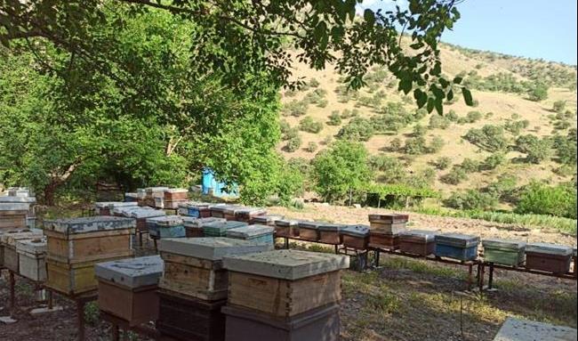 سالیانه بیش از 850 تن عسل در اقلیم کردستان تولید می شود