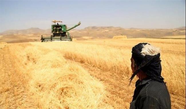 اقلیم کردستان واردات گندم و آرد را ممنوع می کند