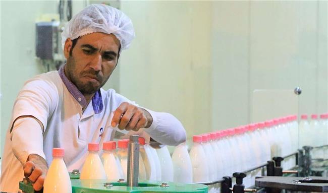 تعیین عوارض صادرات برای شیرخشک و خامه جهت تعادل در بازار