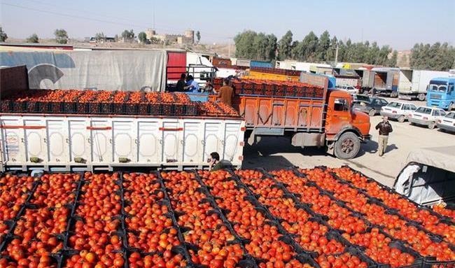 آیا صادرات گوجه فرنگی ممنوع می شود؟ / ازدحام سیب زمینی در مرز