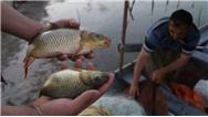 اقلیم کردستان واردات ماهی سالمون را ممنوع کرد + سند