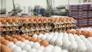 ممنوعیت صادرات تخم مرغ