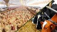 اعلام میزان واردات مورد نیاز ماهی، دام و طیور استان سلیمانیه برای ماه آینده + تناژ مورد نیاز