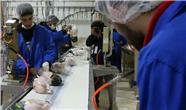 صادرات 40 تن مرغ از مازندارن به عراق