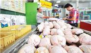 دلایل افزایش قیمت مرغ در کردستان عراق / نابودی 70 درصد از مرغ های تولیدی