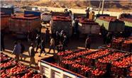 استان کردستان 60 هزار تن گوجه فرنگی  به عراق صادر کرد