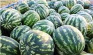 واردات هندوانه به کردستان عراق آزاد شد