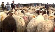 مصرف 86 هزار تن گوشت دامی در کردستان عراق