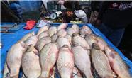 واردات ماهی به اقلیم کردستان ممنوع شد