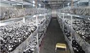 وضعیت بازار قارچ اقلیم کردستان و میزان تولید داخلی
